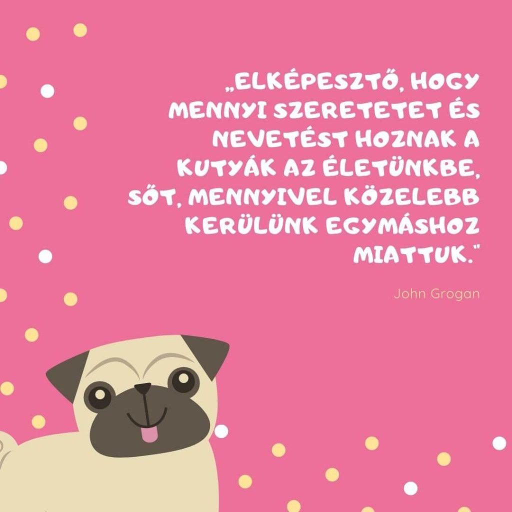 Kutya idézetek rövid